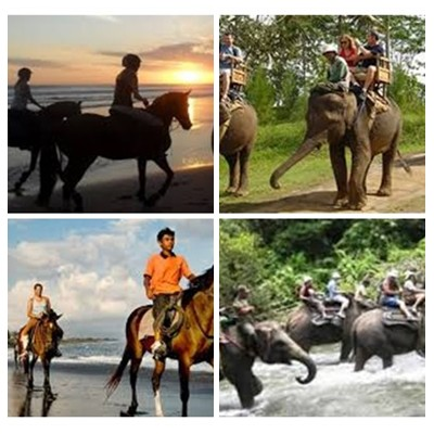 Bali Horse Riding and Elephant Ride Tour