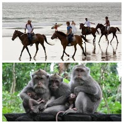 Bali Horse Riding and Ubud Tour