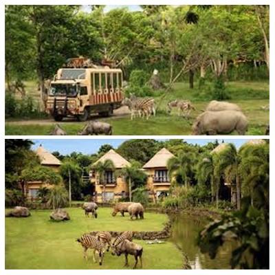 Bali Safari Marine Park Tour