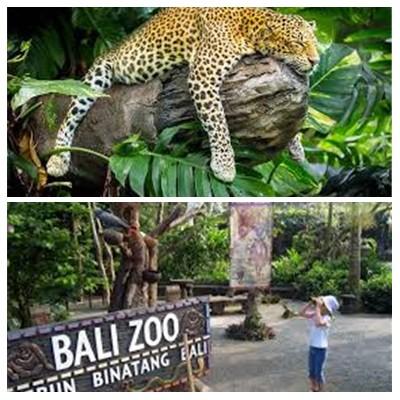 Bali Zoo Park Tour