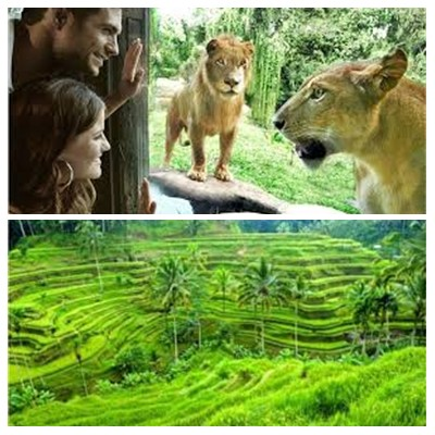 Bali Zoo Park and Ubud Tour