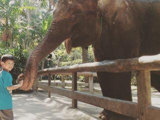 bali-zoo-park