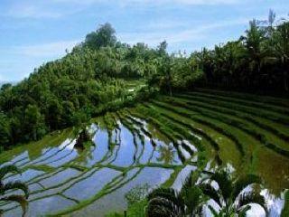 bukit-jambul-rice-terrace