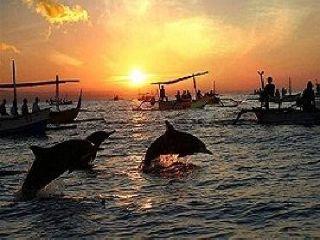 dolphin-lovina-beach