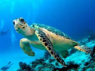 turtle-islands